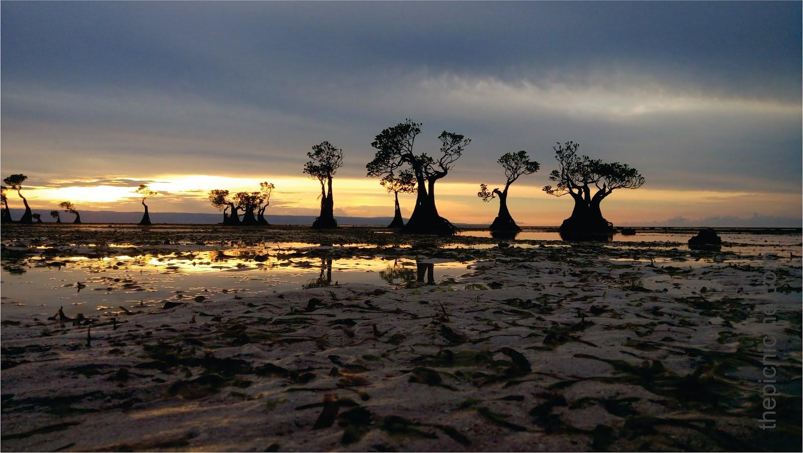Menikmati Fenomena Sunset di Pantai Walakiri Sumba