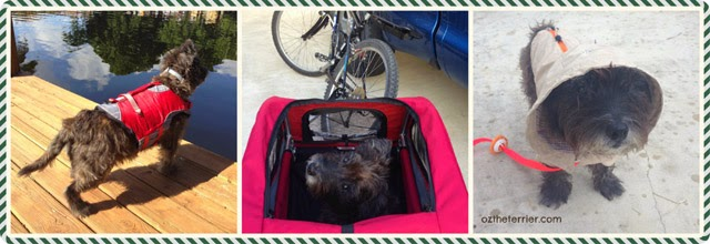 Holiday Gift Guide for Dogs: Kurgo Surf N Turf Jacket, Solvit Products HoundAbout II Bike Trailer, ThunderCoat