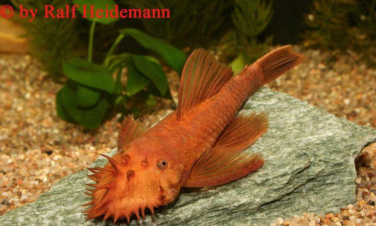 Finatics Tropical Fish...