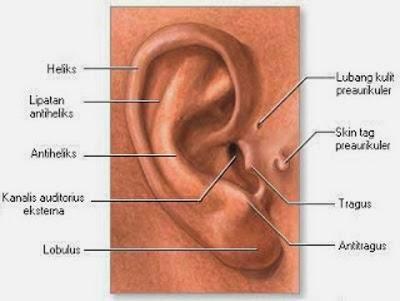 Metode Menyembuhkan Infeksi Telinga Berjamur