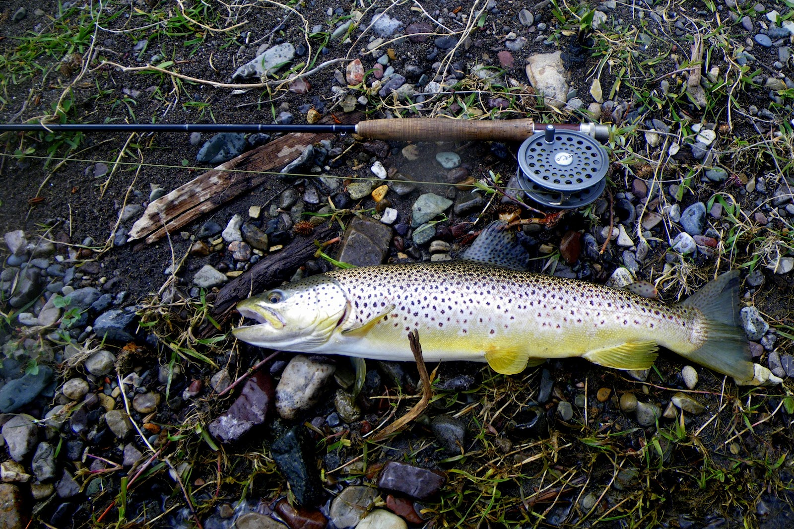 A blog for wapiti waters fly fishing montana jack c for Trout fishing in missouri