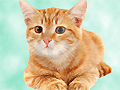 juegos de gatos