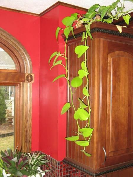 Plantas y flores plantas especies septiembre 2012 for Plantas de interior con poca luz