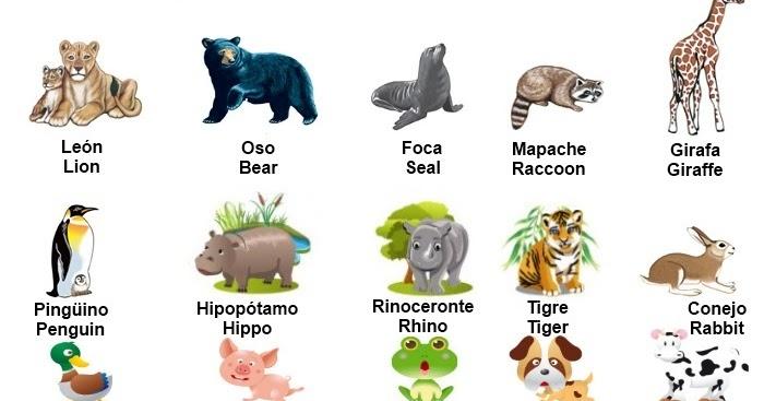 Colors in spanish: Animals in Spanish