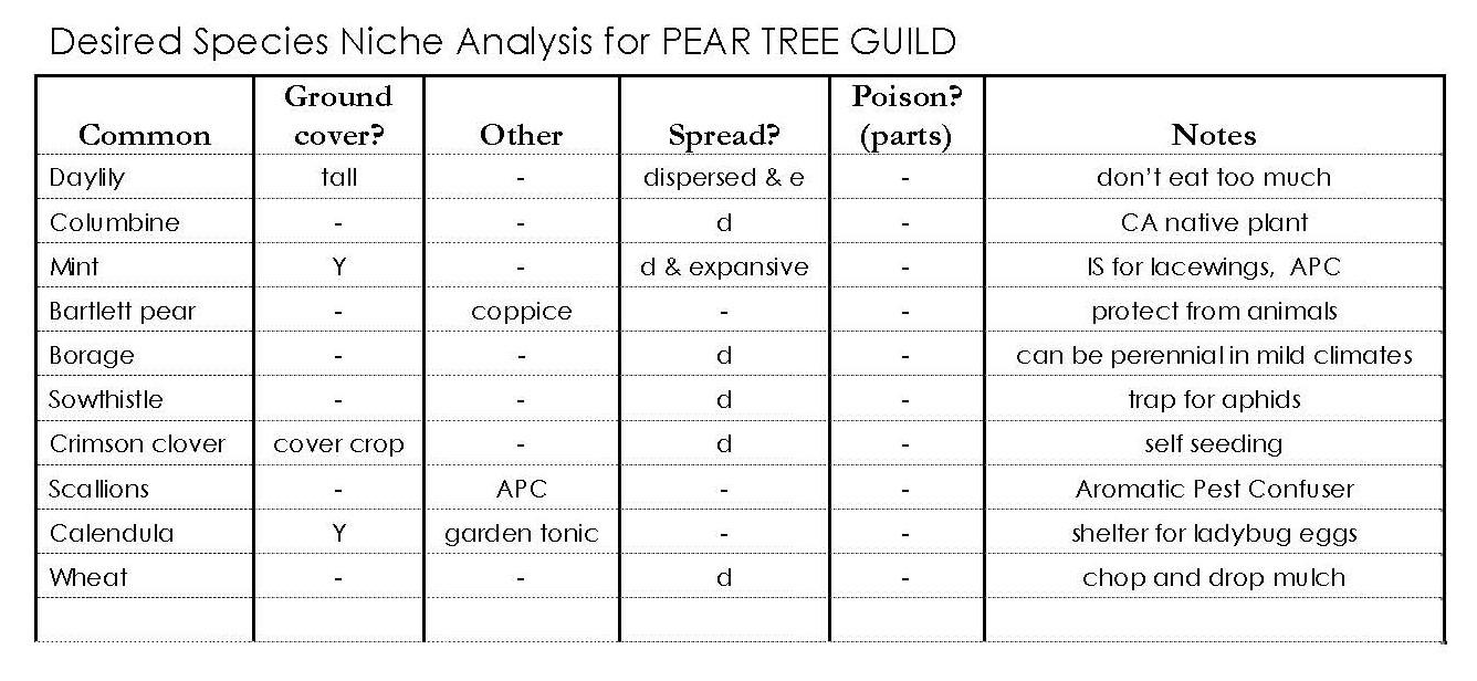 GAIA CREATIONS: BEYOND COMPANION PLANTING U2013u0027Guild Buildingu0027 A Forest Garden