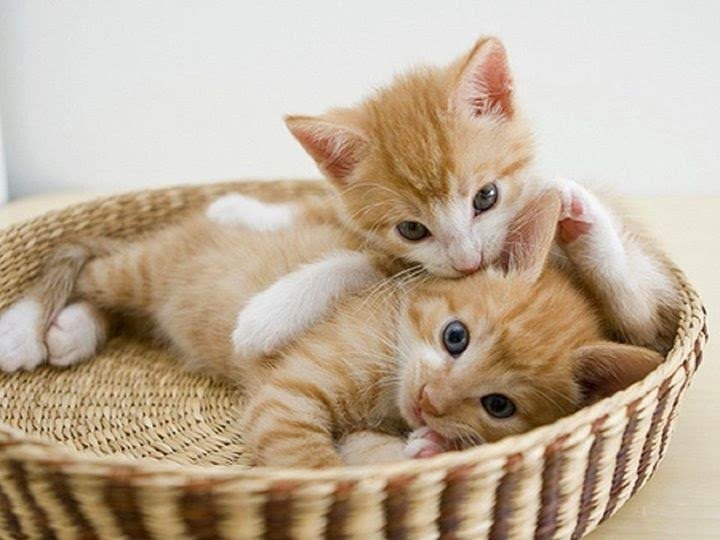 Image result for gatos tiernos