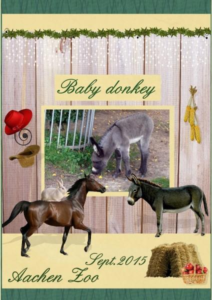 Feb.2016 - Baby Donkey
