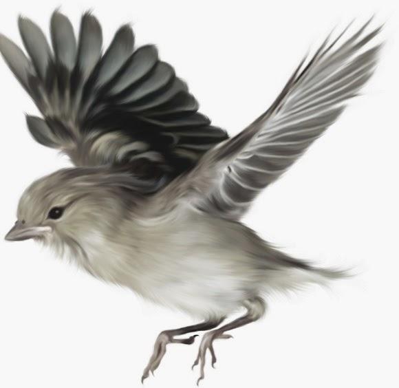Gambar Lukisan Burung