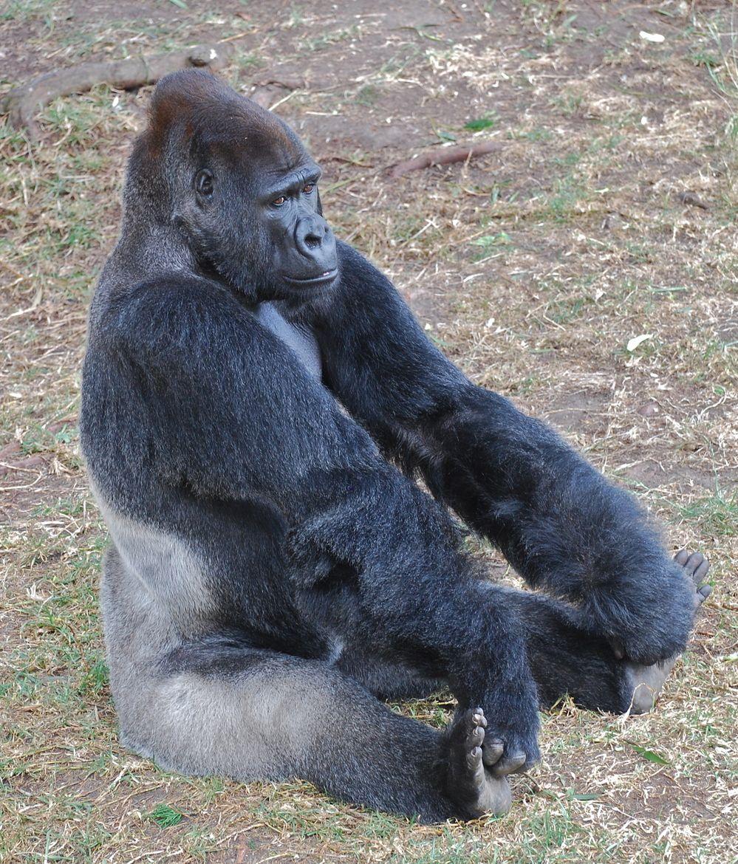 3. Gorilla Yoga