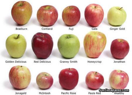Jenis-jenis Epal