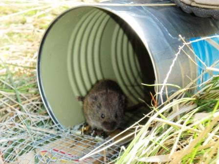 Discover nature mini mammals on the prairie - Volle trap ...