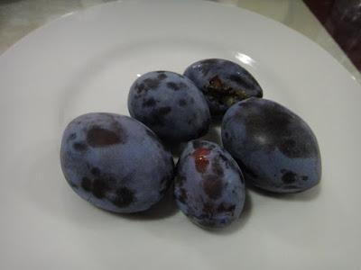 Turkish plums
