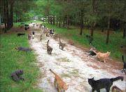 Cats Heaven