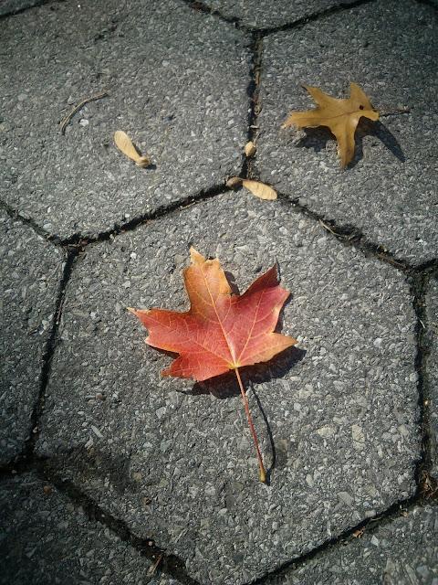 Autumn, Central Park, New York,