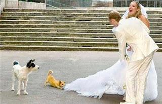 funny wedding photos: dog bites wedding dress