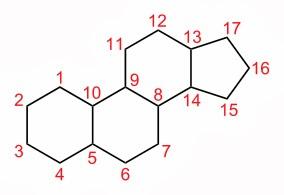Estructura química común al colesterol y a todas las hormonas esteroideas