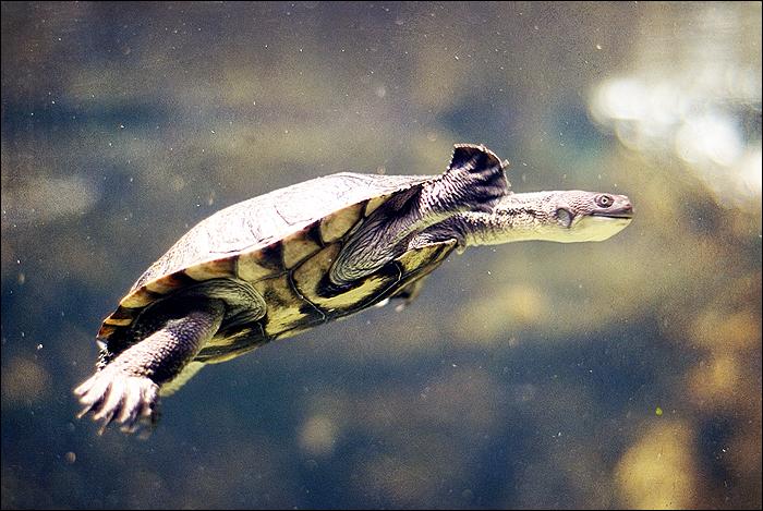 Zoo Leipzig, Schildkröte