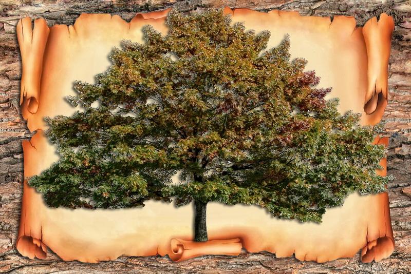 Родове дерево