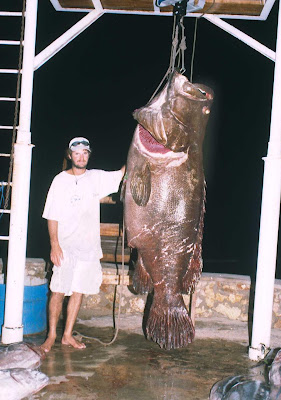 Big fishes of the world grouper giant epinephelus for What is the biggest fish ever caught