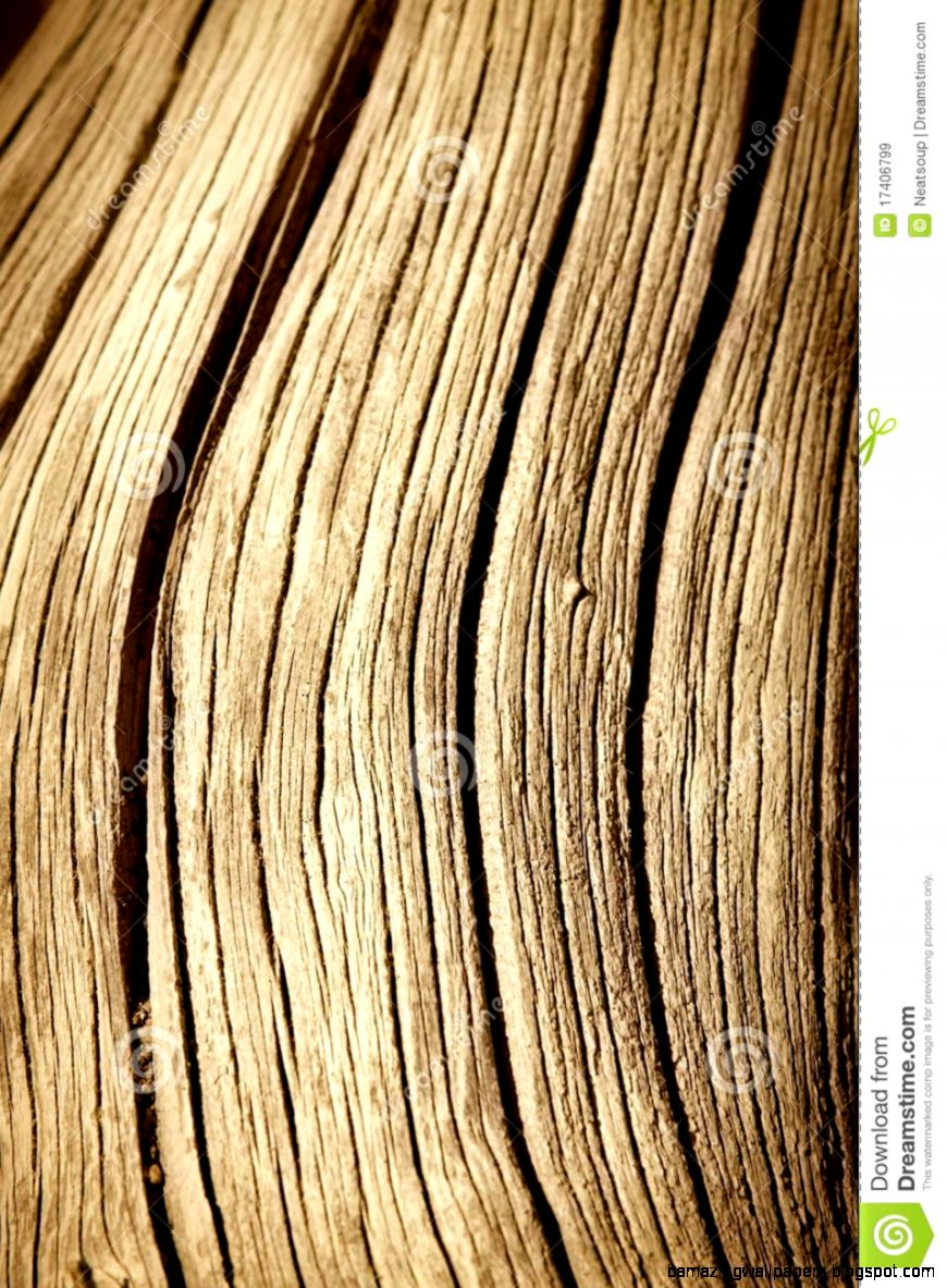 Close Up Of Dead Tree Trunk Royalty Free Stock Images   Image