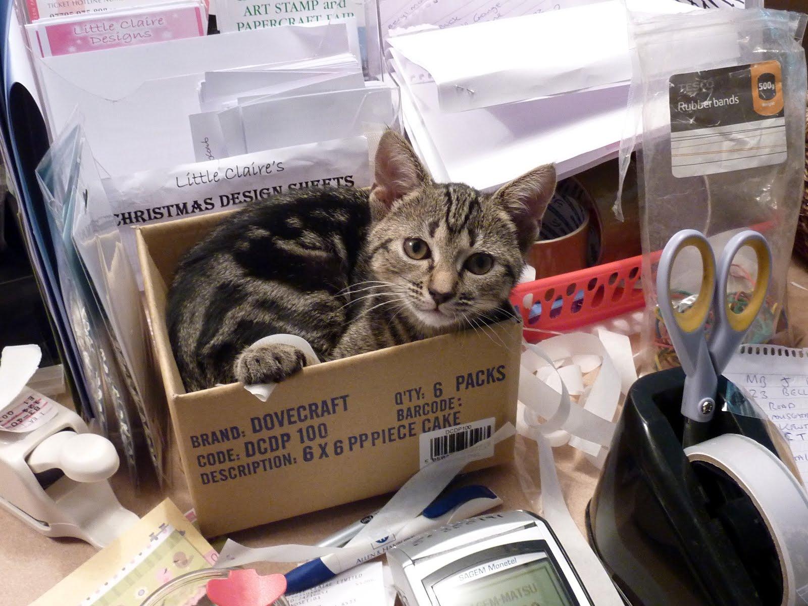 LC Cat