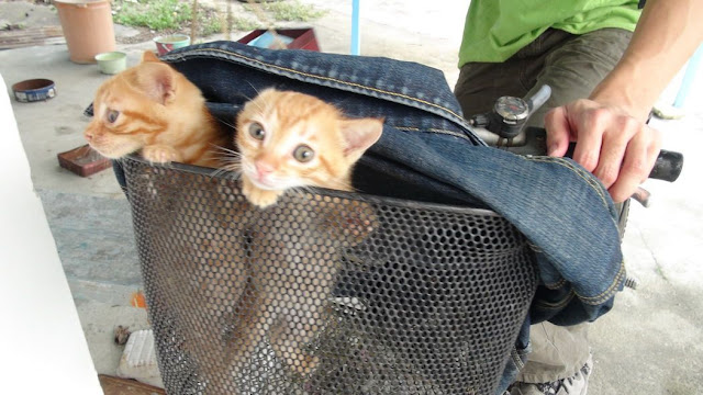 funny cat pictures, two kittens on bike