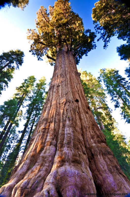 11 Reasons why you MUST Visit Sequoia National Park  Roadtrippers