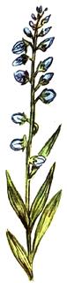 Amareala
