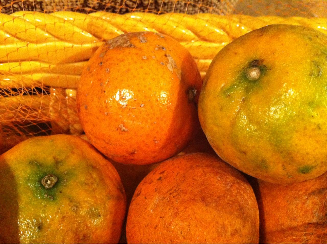 Orange fruit copyright free image