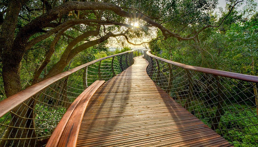 tree canopy walkway Cape Town South Africa-1