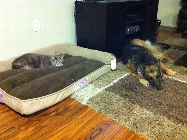 Кот спит на месте собаки