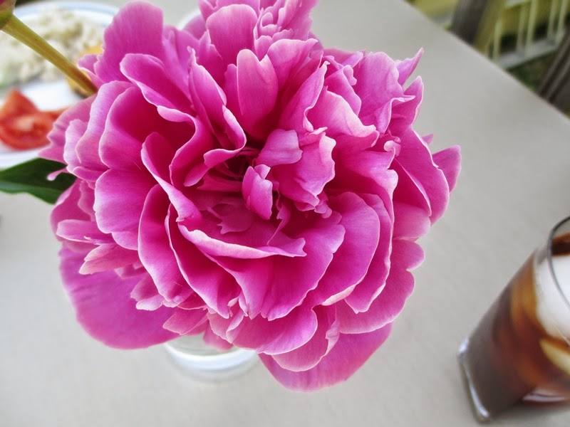 Hot Pink Peony Flower Close Up