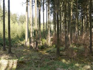 Bild 5: Grabhügel im Forstenrieder Park