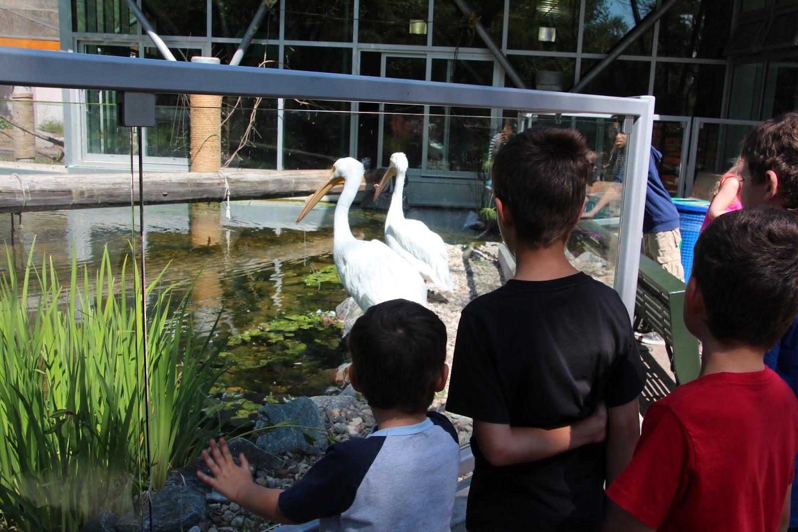 The Bollmans The Edmonton Valley Zoo