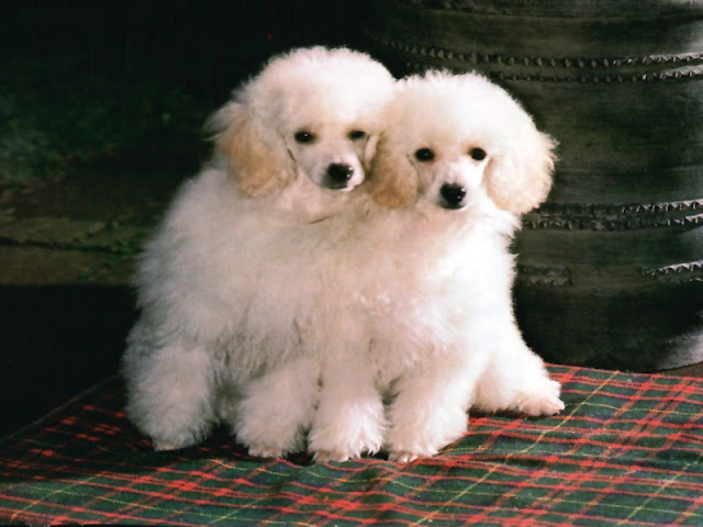 Cute Pet Dogs 15