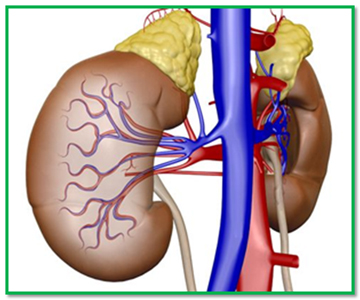 Avoid dialysis, kidney failure, how to avoid dialysis