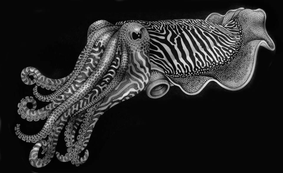 03-Cuttlefish-Tim-Jeffs-All-Creatures-Great-and-Small-Ink-Drawings-www-designstack-co