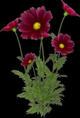 Cosas para photoscape im genes para photoscape de flores for Plantas ornamentales con flores