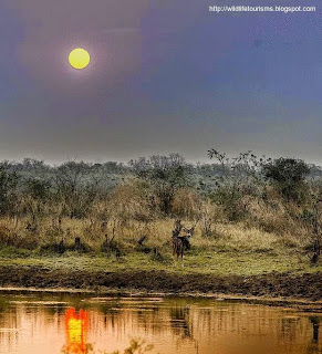 Sunrise in Tadoba