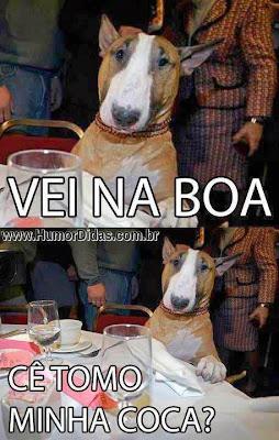 Imagens legais de cães para postar no Facebook