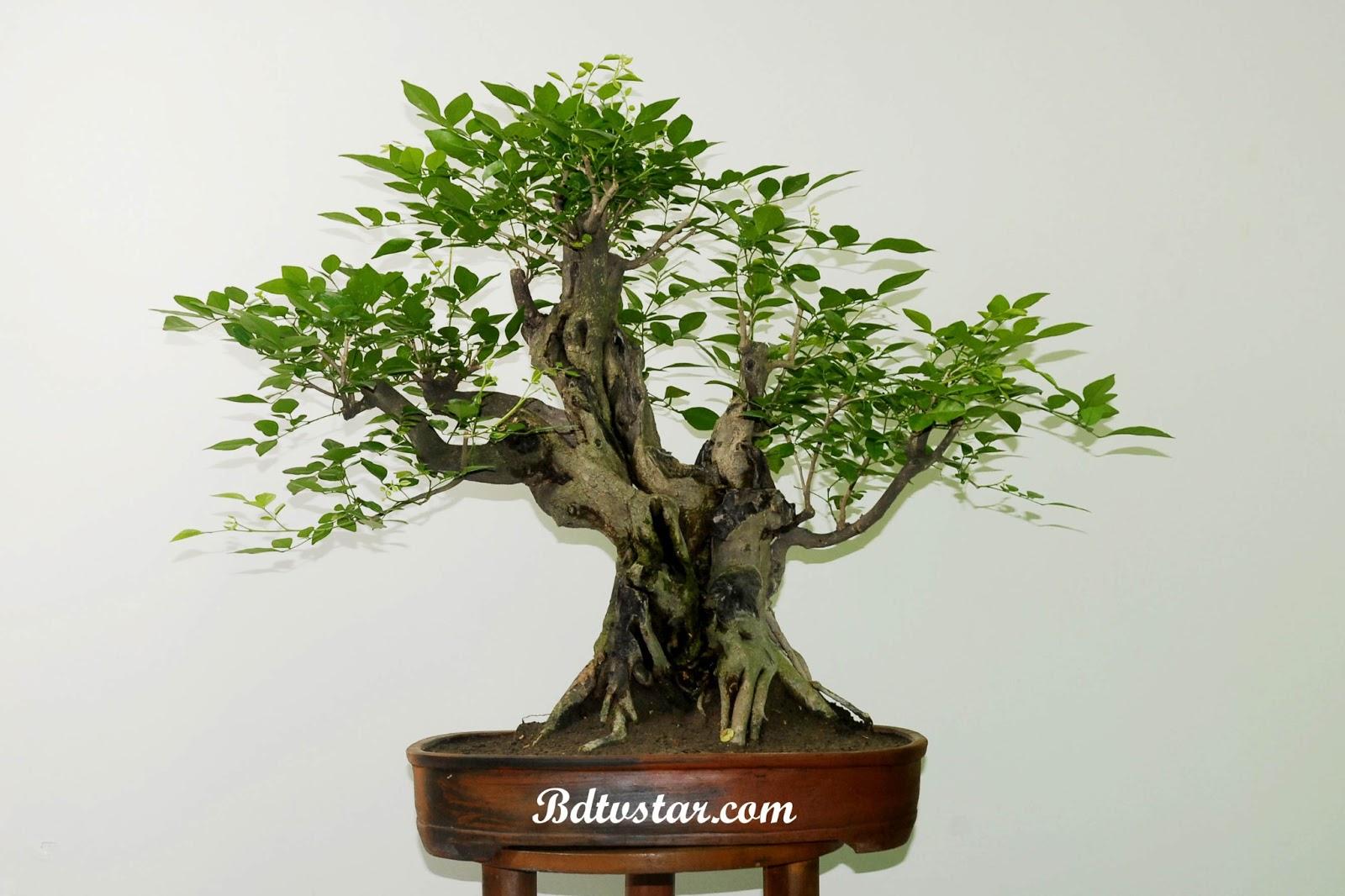 bonsai wallpaper 03 ndash - photo #42