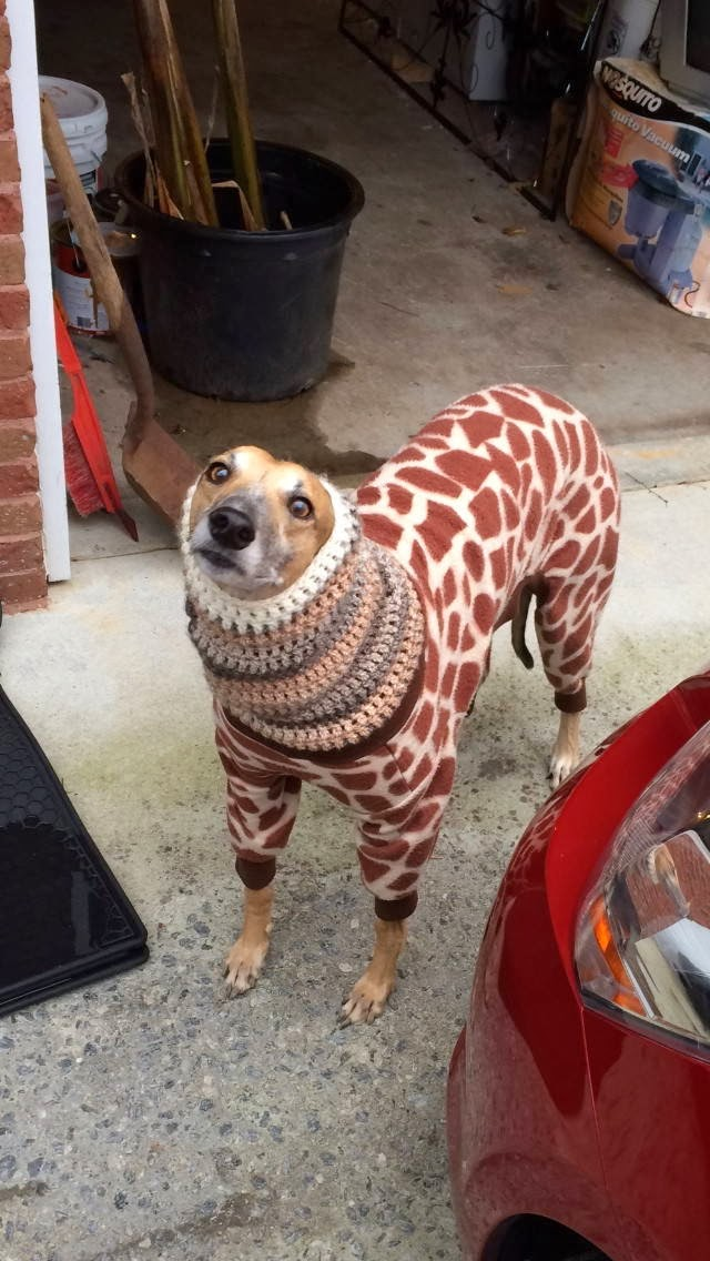 Cute dogs - part 9 (50 pics), dog wears a giraffe sweater