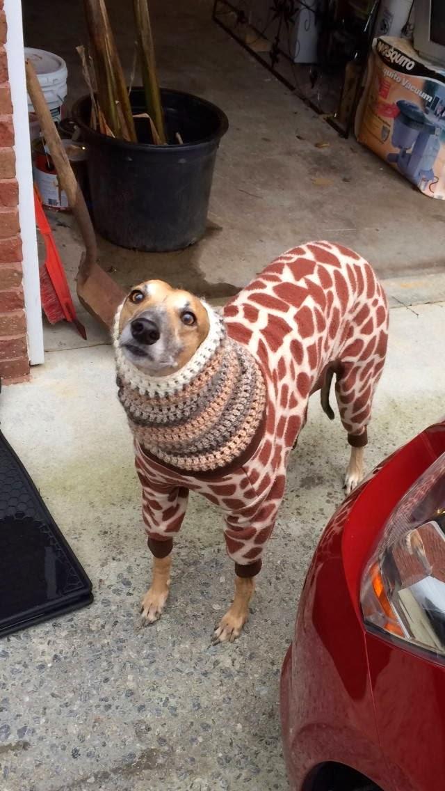 Cute dogs - part 9 (50 pics), dog wears a giraffe sweater