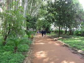 Parque do Piqueri - Tatuapé - SP