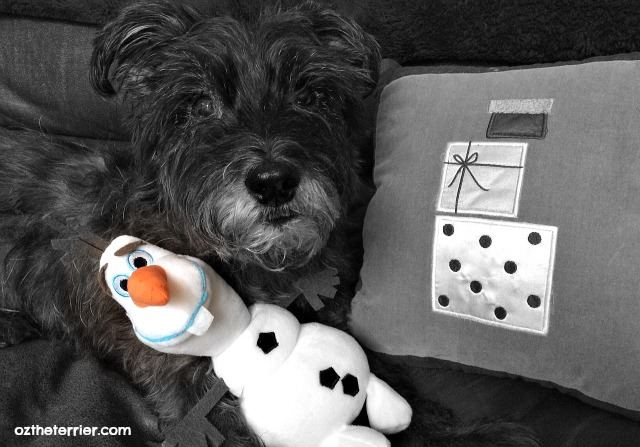 Oz the Terrier and Disney Frozen Olaf Dog Toy wll melt your heart