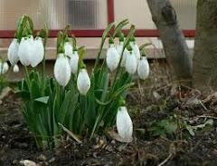 Közelít a tavasz