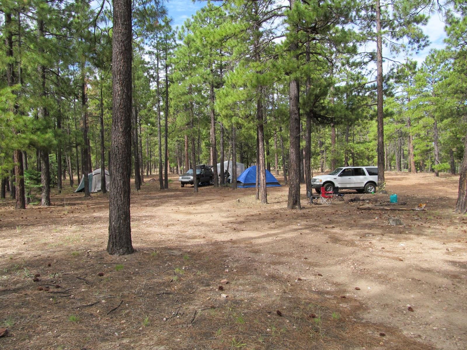 wild outdoor living chevlon canyon forest road 237. Black Bedroom Furniture Sets. Home Design Ideas