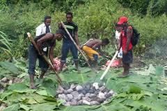 """"""" bakar batu """" salah satu tradisi masyarakat papua"""