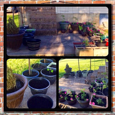 newly planted patio vegetable garden