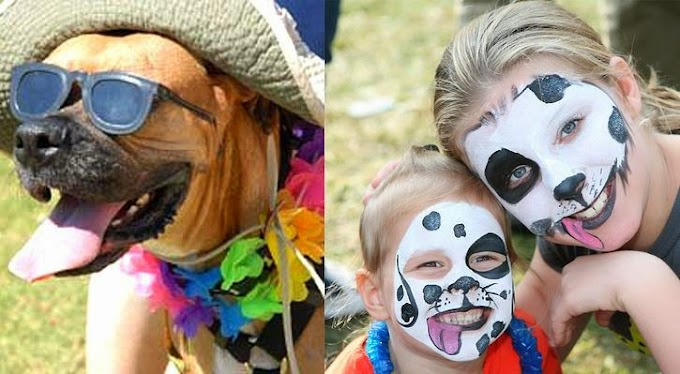 Pooch-A-Palooza Festival Expected To Draw Over 8,000 Attendees